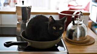 猫のしつけ正しい褒め方と叱り方、トイレの覚えさせ方