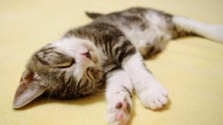 初めて猫を飼う前の準備と必要な知識